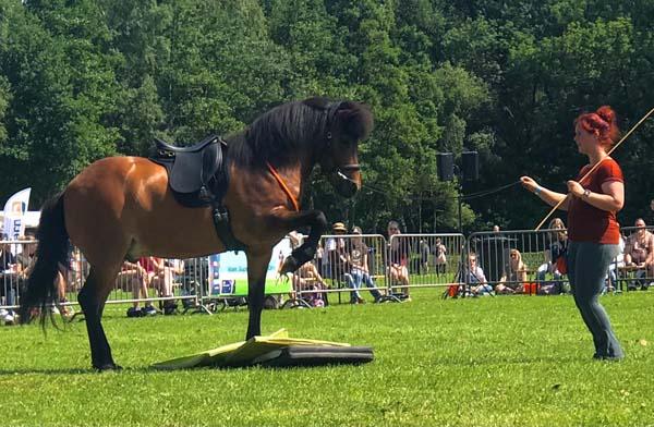 horseboarden nederland