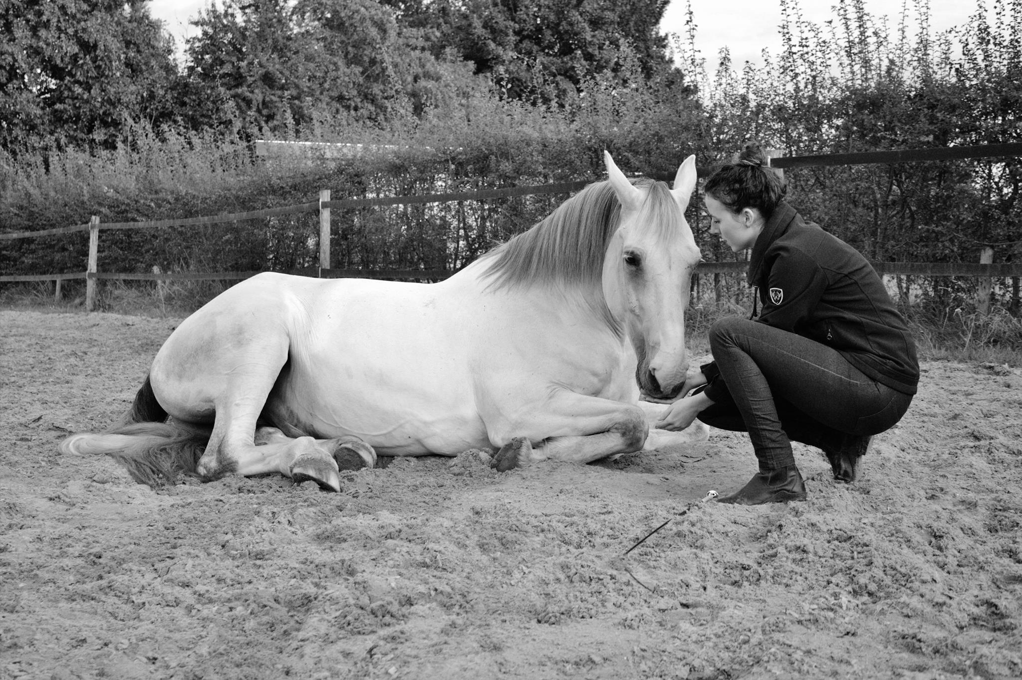 Lotte Houtert dressuur en horsemanship PSG NH VD