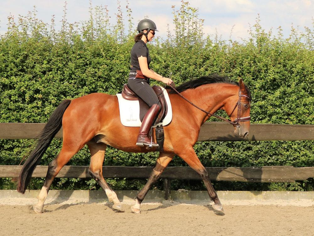 Mireille den Hoed paard in balans longeren en rijden