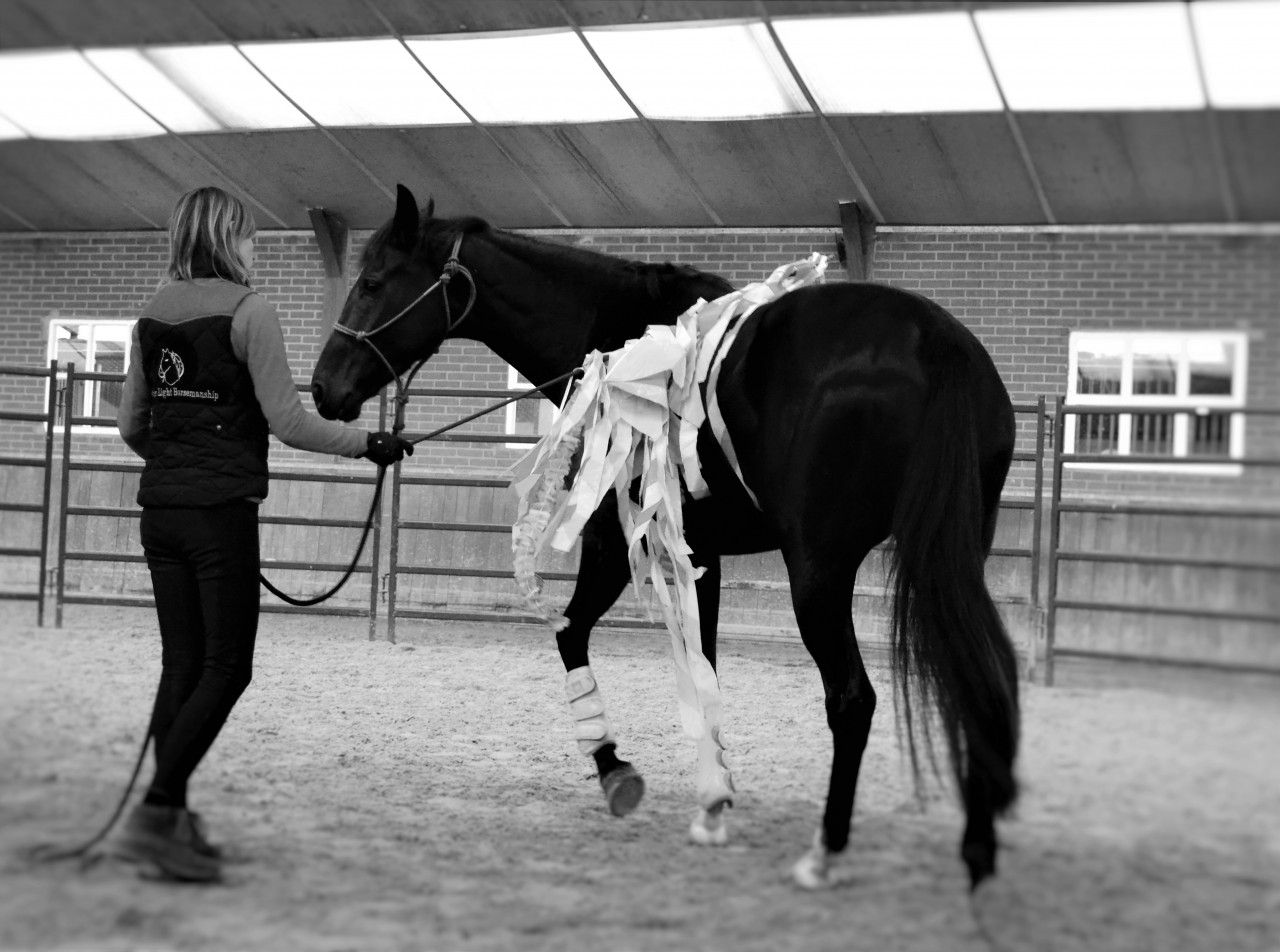 Yvet Feather light horsemanship show